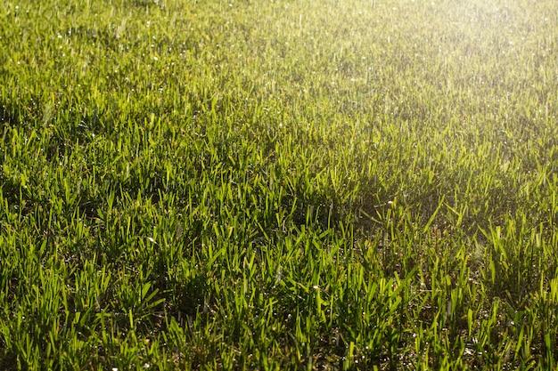 Nat gras tijdens het water geven