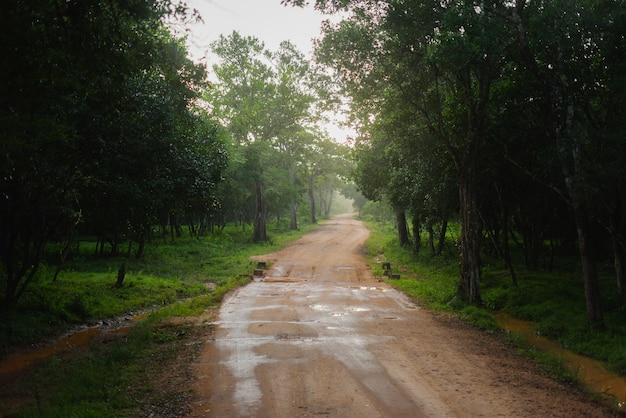 Nationaal park wilpattu, sri lanka road dawn