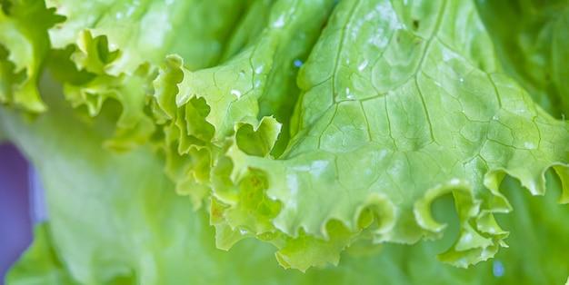 Natte groene bladsla in macrofotografie