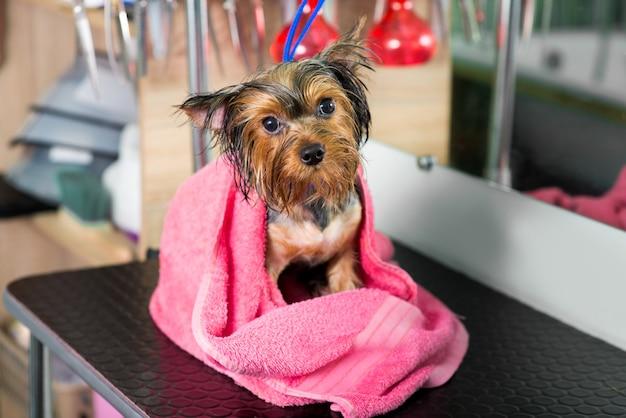 Natte hond na het baden in een roze handdoek in de trimsalon