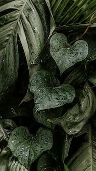 Natte monstera plant verlaat mobiel behang
