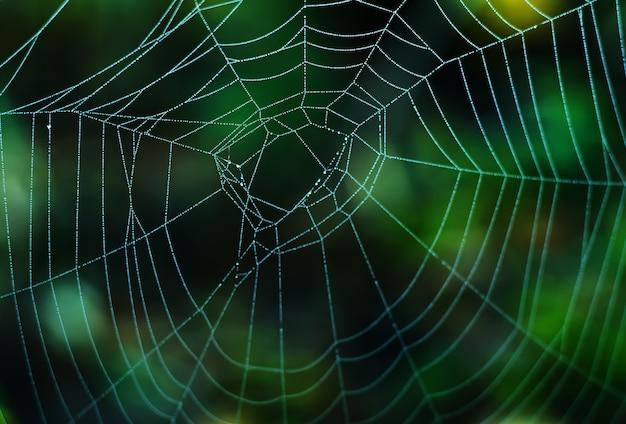 Natte web op een groene ondergrond