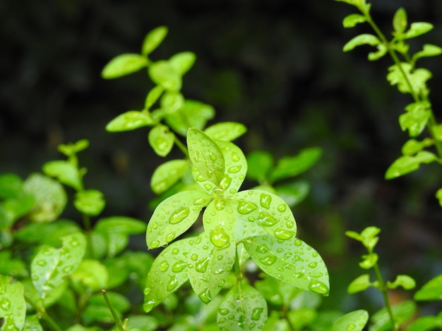 Naturaleza y gotas de lluvia