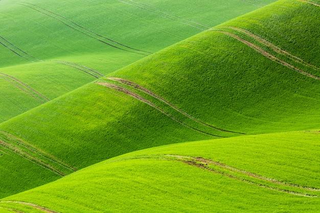 Natuur abstract minimalistisch patroon. glooiende heuvels van groene tarwevelden.