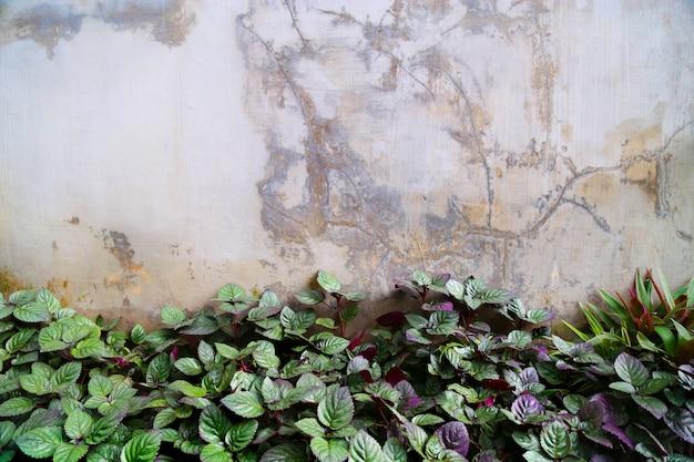 Natuur achtergrond sjabloon