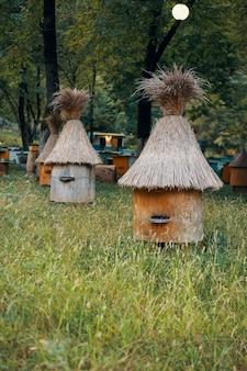 Natuur bijenkorf bomen groen gras ecologie reizen