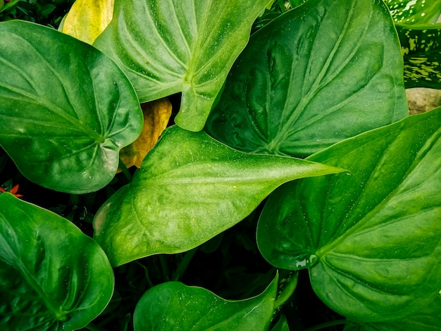 Natuur blad Premium Foto