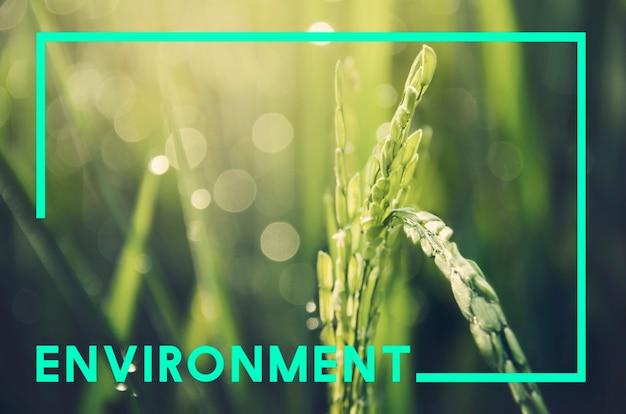 Natuur ecologie natuurlijk milieu concept