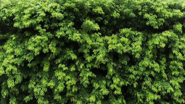 Natuur groen blad achtergrond en textuur, bladeren muur voor achtergrond panorama