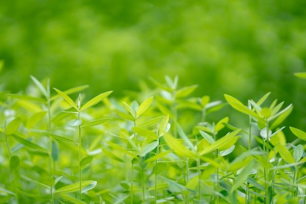Natuur, groen, boom, close-up groene boom in de natuur. als achtergrond