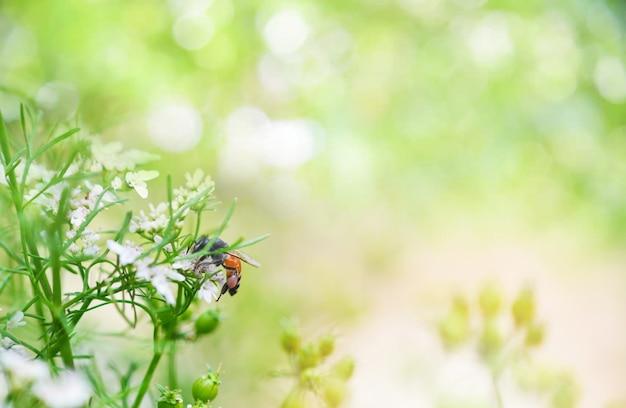 Natuur groen geel achtergrond abstract natuur heldere bijen op bloem bee verzamelt de lente worden