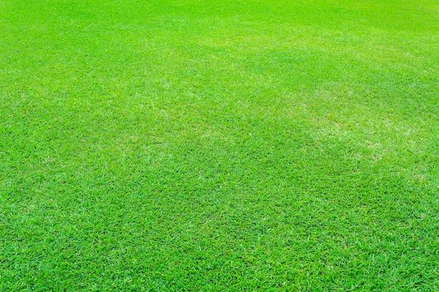 Natuur groen gras achtergrond