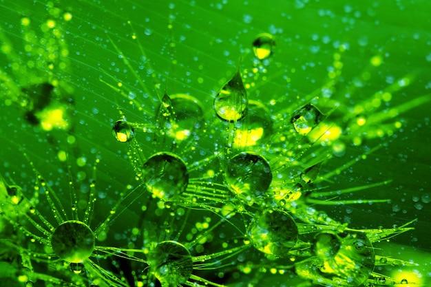 Natuur groen verlof met regendruppel achtergrondstructuur