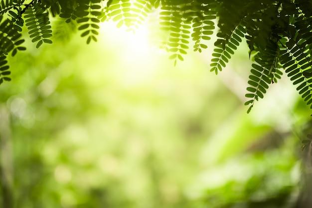Natuur groene bladeren op wazig groen boom achtergrond met zonlicht