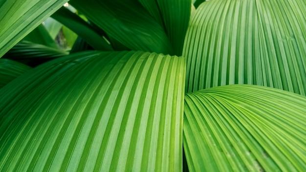 Natuur groene bladeren voor achtergronden Premium Foto