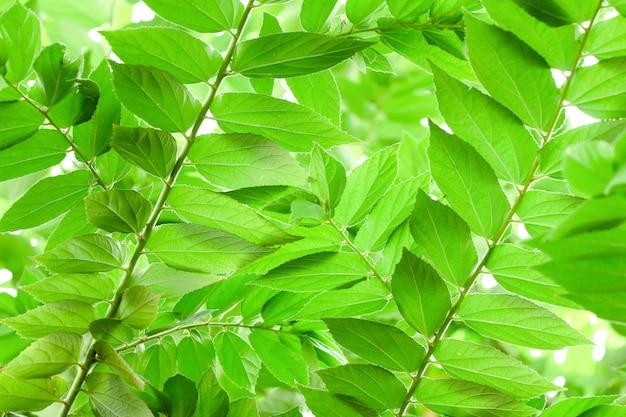 Natuur groene bladeren