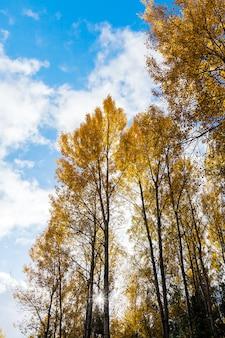 Natuur in de herfst, bomen en natuur in de herfst van het jaar, vergeelde vegetatie en bomen