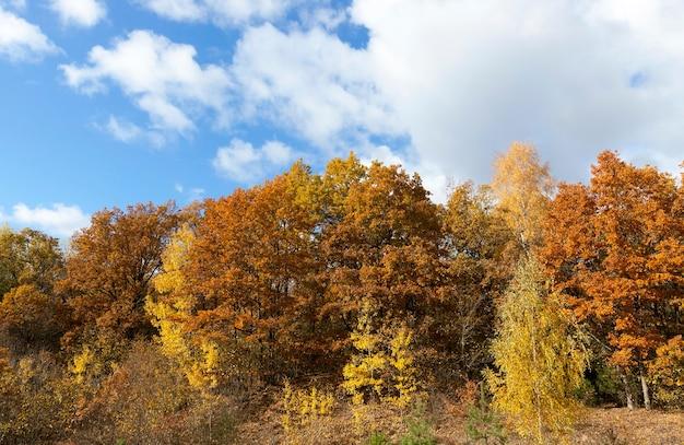 Natuur in herfstseizoen - gefotografeerde bomen en natuur in de herfst van het jaar, vergeelde vegetatie en bomen