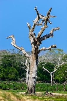 Natuur in het regenwoud op het eiland sri lanka
