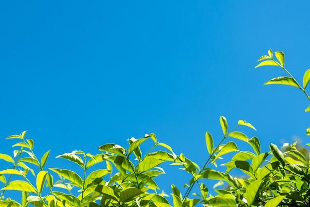 Natuur lafe met bluesky en cloud Premium Foto
