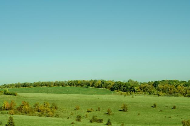 Natuur landschap. weiland met groen en geel gras, bomen, blauwe lucht.