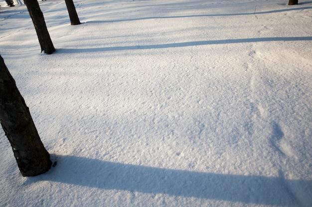 Natuur na een sneeuwval