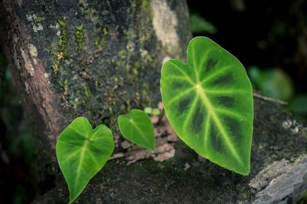 Natuur plant