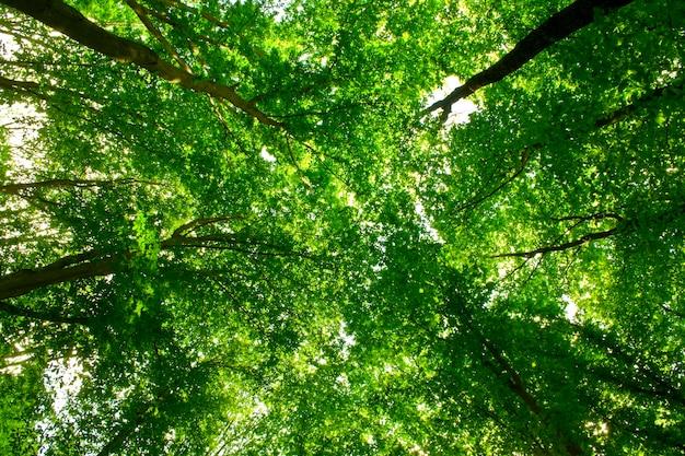 Natuur. traject in het bos met zonlicht