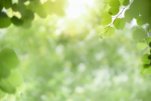 Natuur weergave groen blad op wazig groen achtergrond onder zonlicht met bokeh en kopie ruimte.