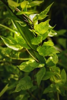 Natuur weergave van groene bladeren op wazig groene achtergrond in de natuur. macrofotografie met super ondiepe scherptediepte.