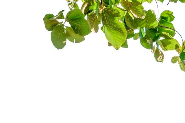Natuurblad met vrije ruimte