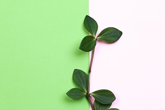 Natuurlijk creatief concept. groene plantentak met bladeren op trending roze groene achtergrond