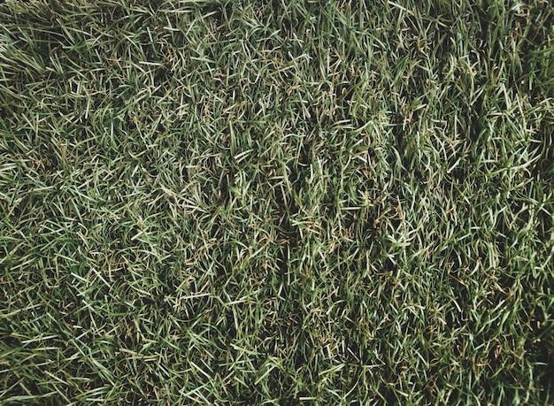 Natuurlijk gras