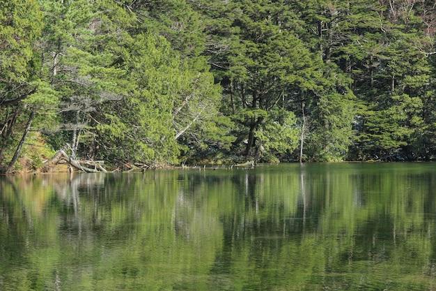 Natuurlijk groen bladerenboombos met bezinning over myojin-vijver.