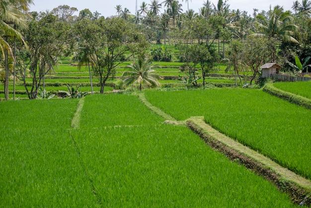 Natuurlijk groen landschap