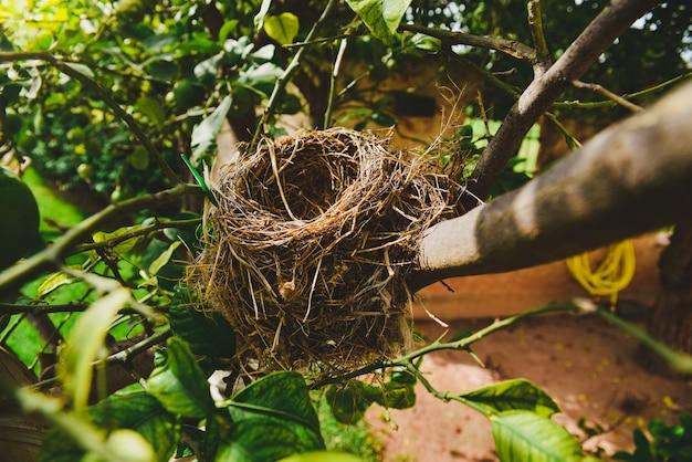 Natuurlijk leeg nest van vogels.