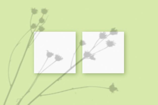 Natuurlijk licht werpt schaduwen van de plant op 2 vierkante vellen wit gestructureerd papier op een groene gestructureerde achtergrond