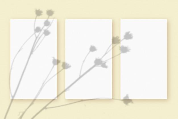 Natuurlijk licht werpt schaduwen van de plant op 3 verticale vellen wit gestructureerd papierformaat, liggend op een beige gestructureerde achtergrond