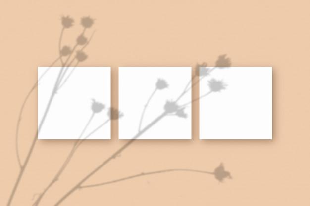Natuurlijk licht werpt schaduwen van de plant op 3 vierkante vellen wit gestructureerd papier op een beige gestructureerde achtergrond