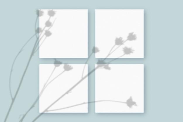 Natuurlijk licht werpt schaduwen van de plant op 4 vierkante vellen wit gestructureerd papier op een blauwe gestructureerde achtergrond