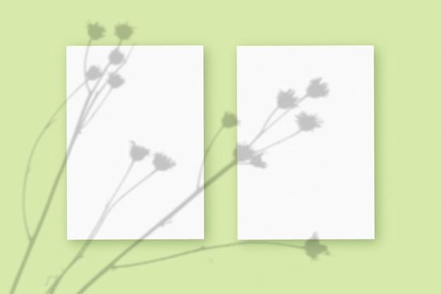Natuurlijk licht werpt schaduwen van de plant op twee verticale vellen wit gestructureerd papierformaat, liggend op een groene gestructureerde achtergrond