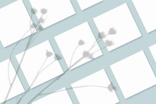 Natuurlijk licht werpt schaduwen van de plant op verschillende vierkante vellen wit papier die op een blauwe gestructureerde achtergrond liggen