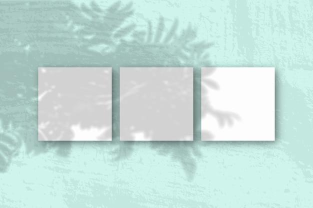 Natuurlijk licht werpt schaduwen van de rowan-tak op 3 vierkante vellen