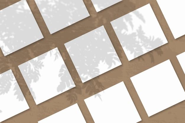 Natuurlijk licht werpt schaduwen van de rowan-tak op verschillende vierkante vellen