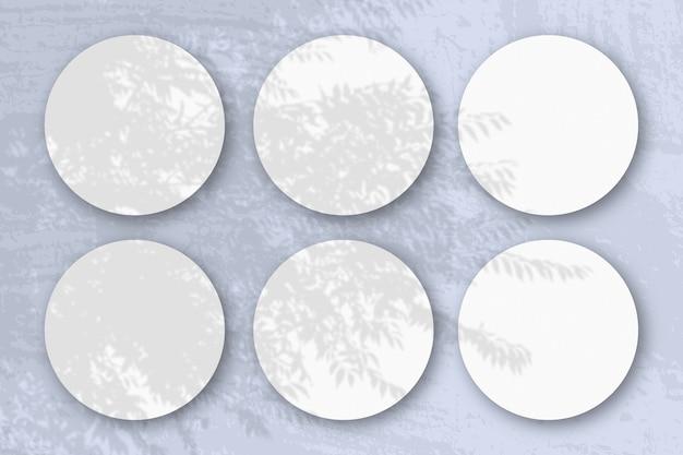 Natuurlijk licht werpt schaduwen van een exotische plant op 6 ronde vellen wit structuurpapier