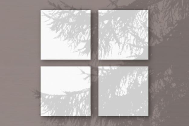 Natuurlijk licht werpt schaduwen van een vuren tak op 3 vierkante bladen