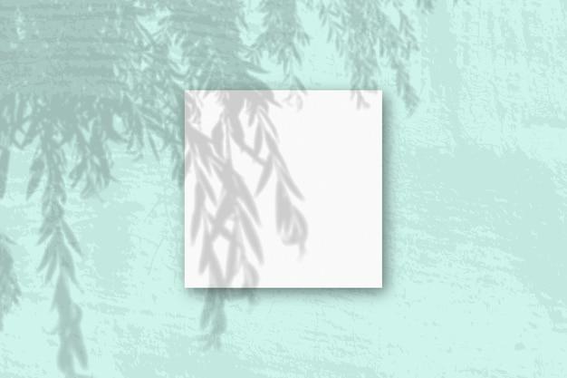 Natuurlijk licht werpt schaduwen van een wilgentak op een vierkant blad