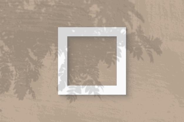 Natuurlijk licht werpt schaduwen van rowan-tak op vierkant frame
