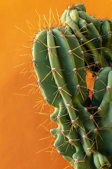 Natuurlijk plantenassortiment op een monochrome achtergrond
