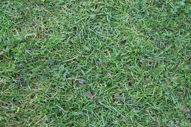 Natuurlijk van groen gras